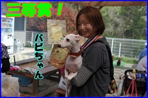 DSC_0177_20120501223428.jpg
