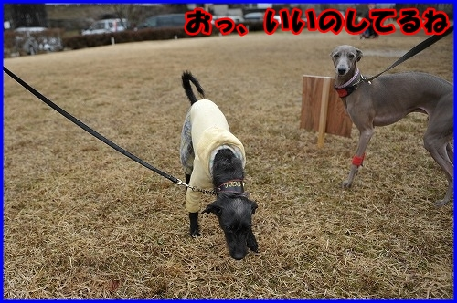 DSC_2723_20120322231610.jpg