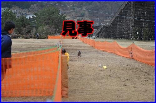 DSC_2816_20120322232113.jpg