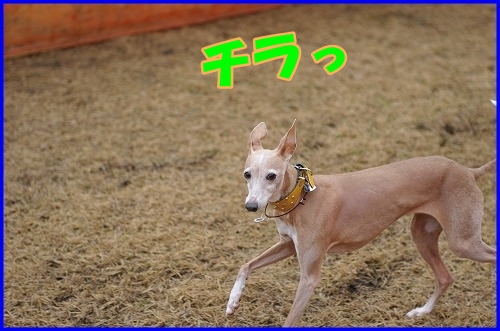 DSC_2836_20120322234830.jpg