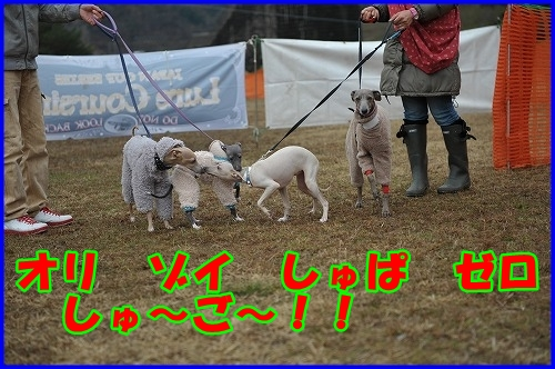 DSC_2874_20120322232310.jpg