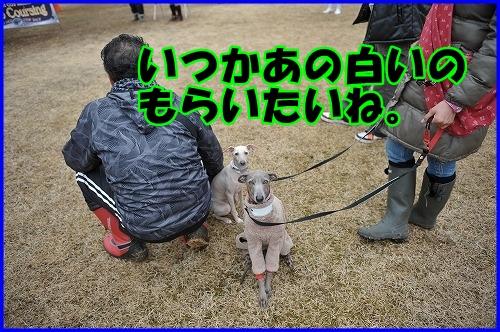 DSC_2894_20120322232456.jpg
