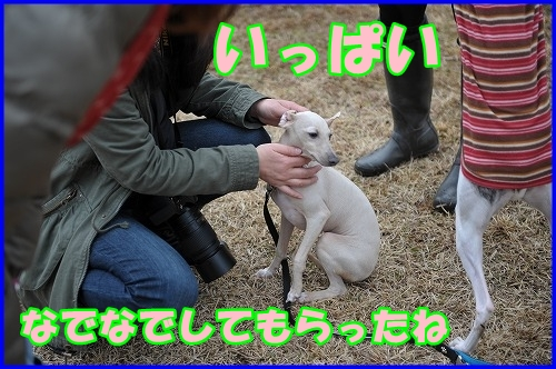 DSC_2908_20120322232544.jpg