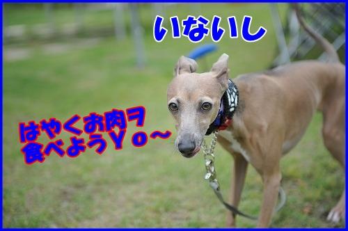 DSC_8800.jpg