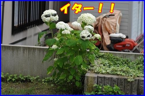 DSC_8831_20110628000126.jpg