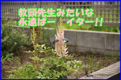 DSC_8835_20110628000127.jpg