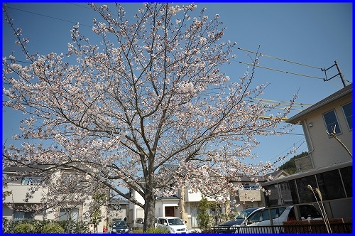 DSC_9519_20120412220557.jpg