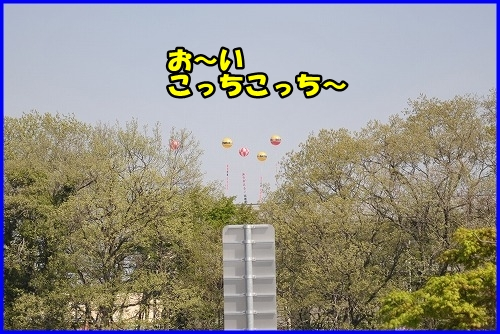 DSC_9987.jpg