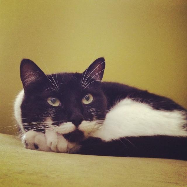gato de ricardo