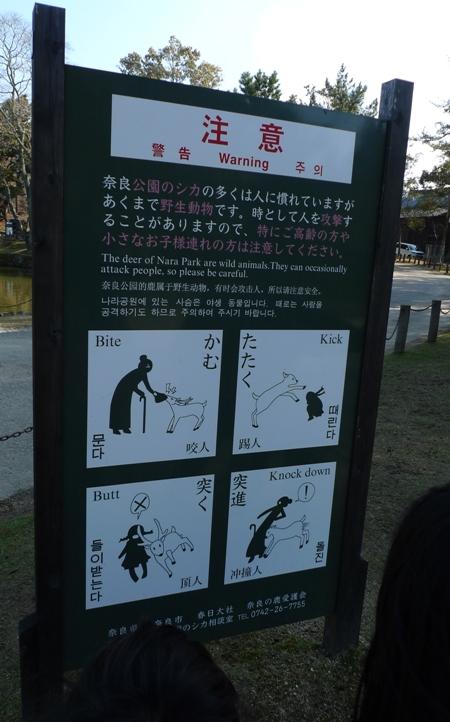 奈良公園にて2