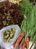 キッチンが新鮮お野菜でいっぱい♪