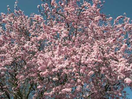 桜 いと子 妹