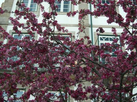 桜 もどき子