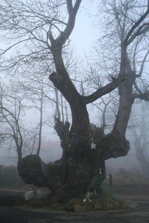 良縁の栗の樹