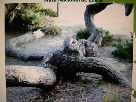蛇松のメス