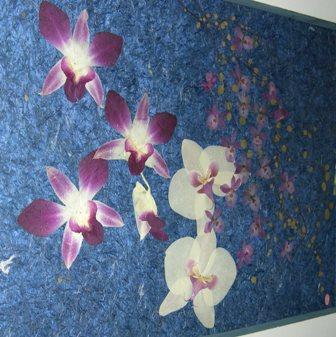 蘭の押し花