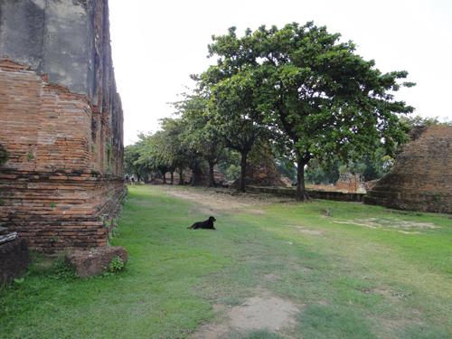2014Nobember-Thailand-141.jpg