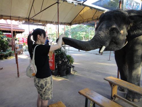 2014Nobember-Thailand-170.jpg