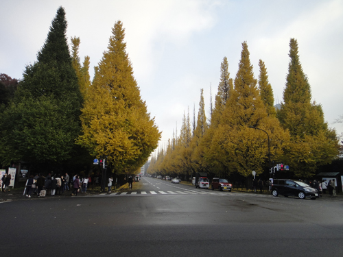 2014The_ginkgo_trees_turned_yewllow_Tokyo-9.jpg