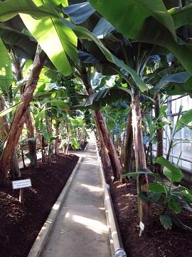 熱川バナナワニ園20131207