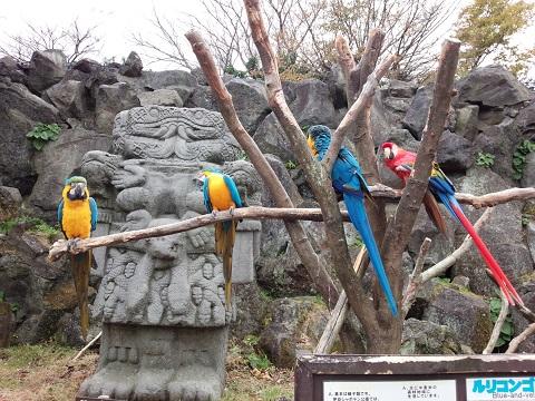 伊豆シャボテン公園20131208