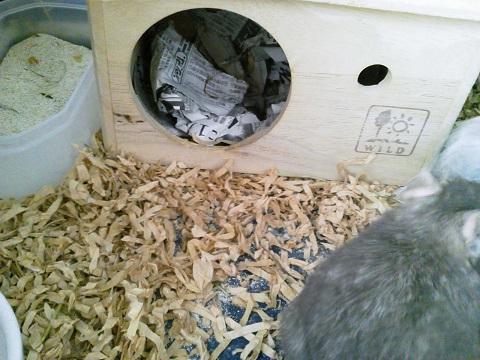 ティノくん、新聞紙で巣作り♪