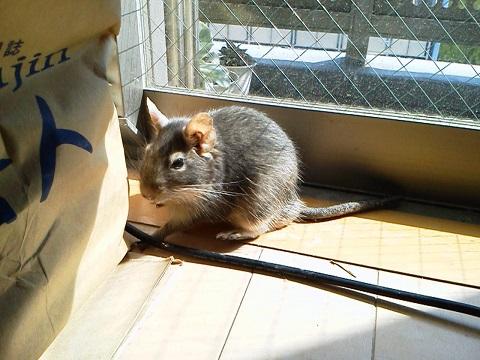 ティノくん、日向ぼっこ