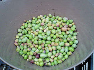 olive2010.jpg