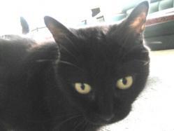 黒猫ジェイ(JJ)