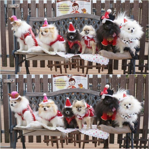 クリスマスパーティ11 13-12