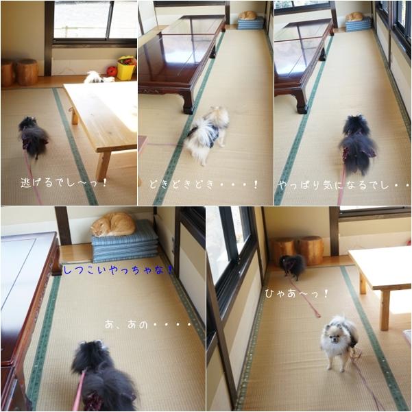 帰省おさんぽ7 14-1