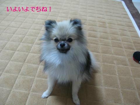 IMG_8494_convert_20111129182808_sh02.jpg