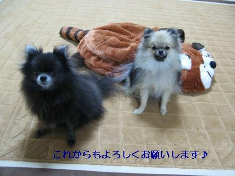 IMG_8501_convert_20111129183625_sh02.jpg
