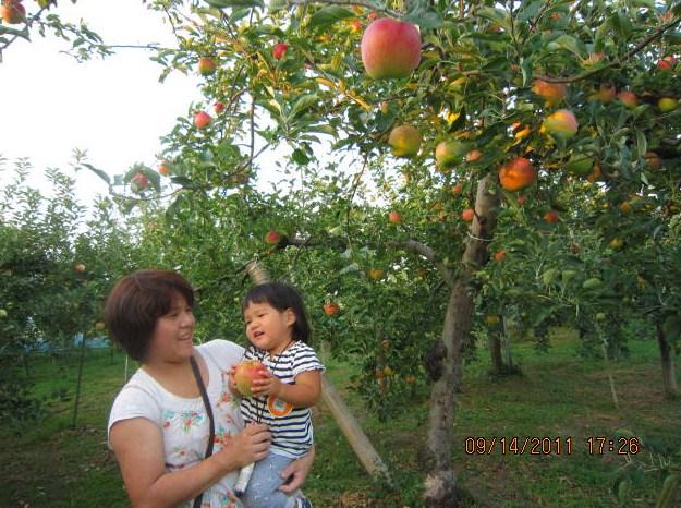 リンゴ摘みの親子