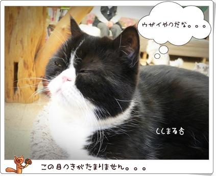 猫の時間3