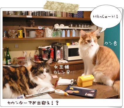 猫の時間6