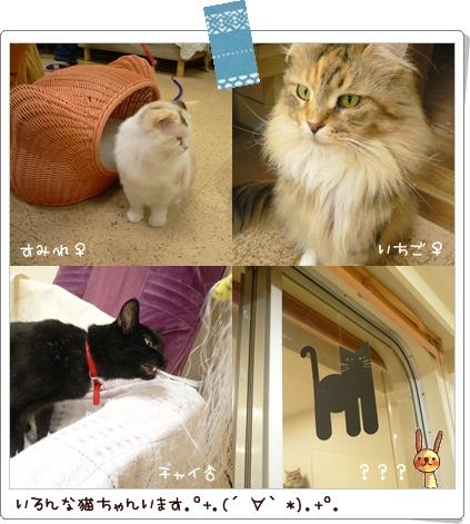 猫の時間9