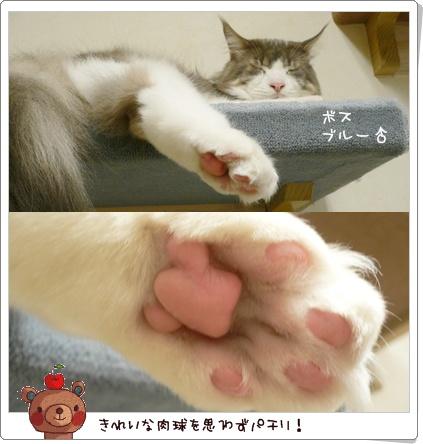 猫の時間8