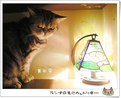 猫の時間5