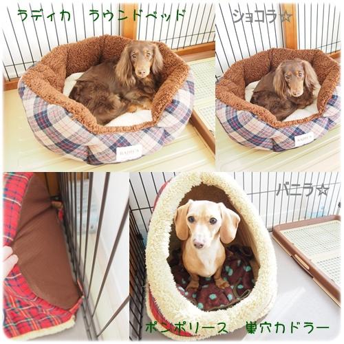 ショコバニの冬用ベッド