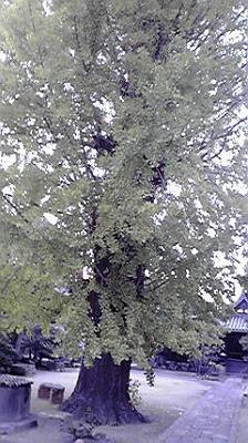 shukusho-P1000449.jpg