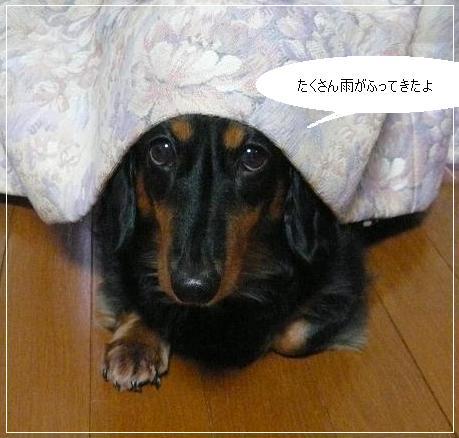 _チョコちゃん