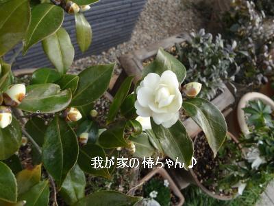 椿2012