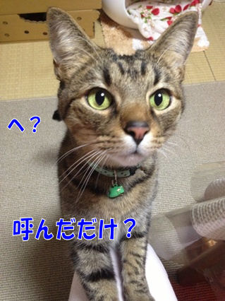 4_20130204215511.jpg