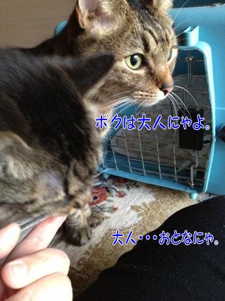 5_20130215010005.jpg