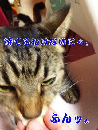 7_20130221214328.jpg