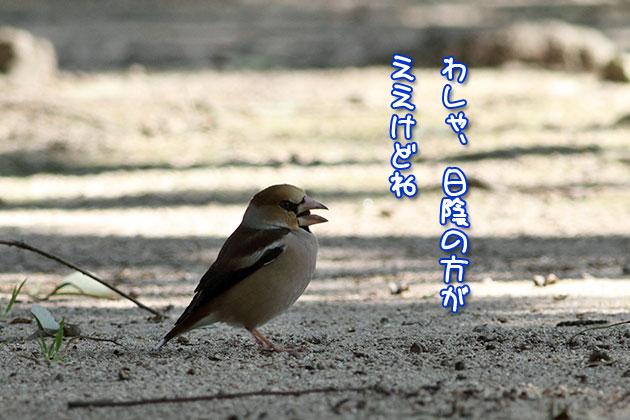 20110222shime.jpg