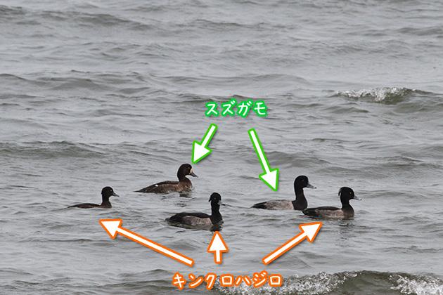 20111011suzugamo.jpg