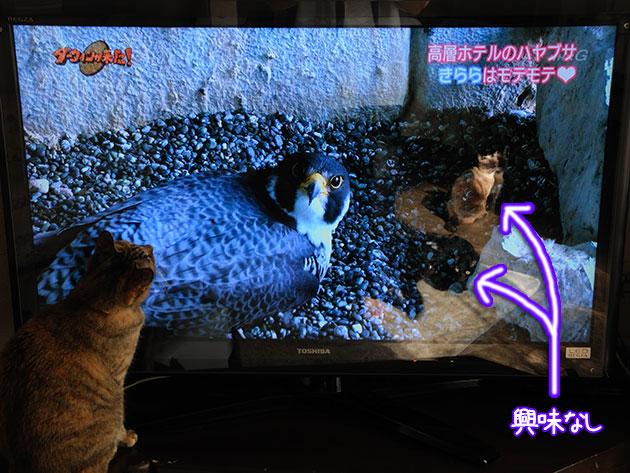 20111201hayabusa01.jpg