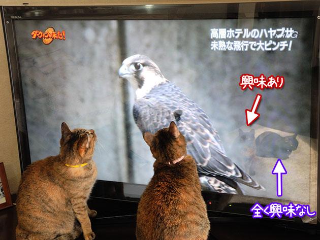 20111201hayabusa02.jpg